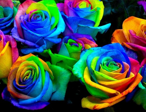 dyed_roses.53122457_large.jpg